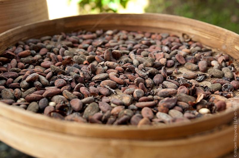 Естественная сушка какао-бобов