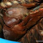 heart_lungs02.JPG