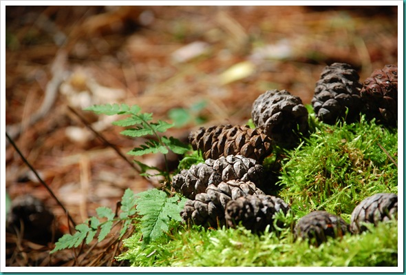 Pinecone Cake