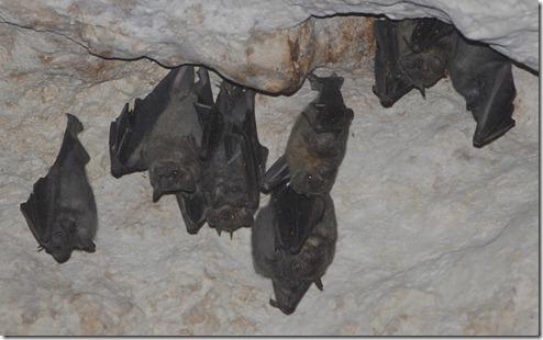murcielagos de cueva