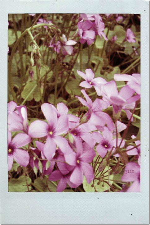 blop019-001