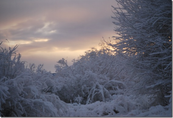 WinterMorning1