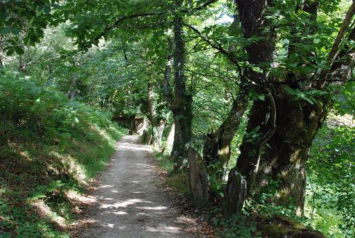 Camino bordeando el Río Sarria en las Aceñas
