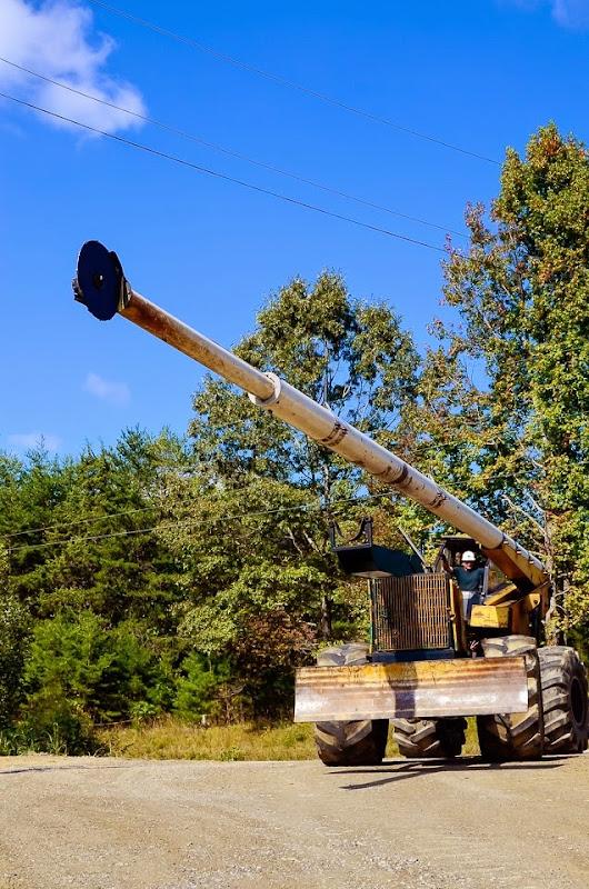 tree cutter-15981