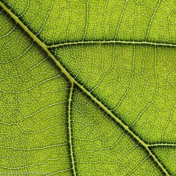 natureze-nature-padrao-pattern-desbaratinando (1)