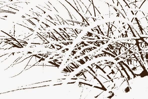 snø og grass