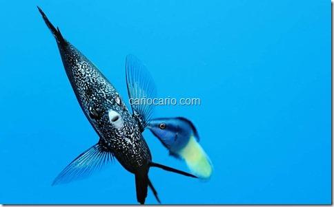 imagens Submarinas (4)
