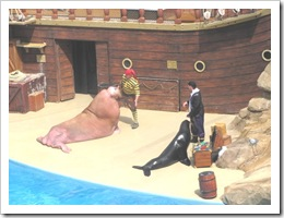 Florida vacation Epcot pirate show with seals and walrus2