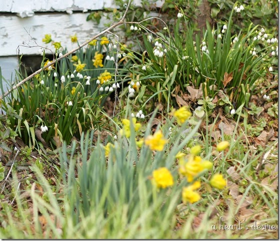 Daffodil and Lily of the Valley
