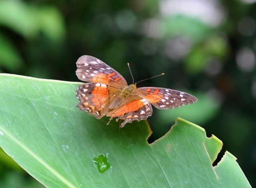 2013-07-05 butterfly pavilion (54)