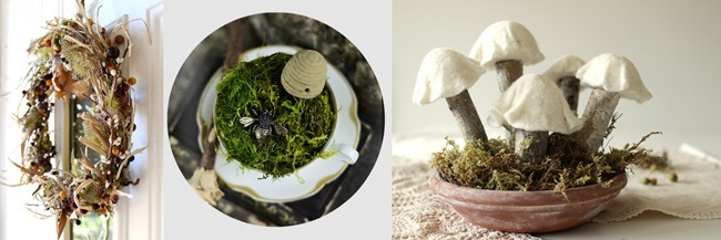 Blog Mushrooms