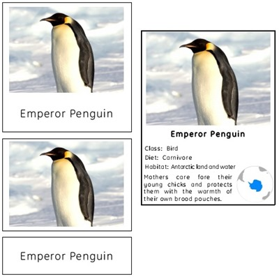 Animals of Antarctica Preview
