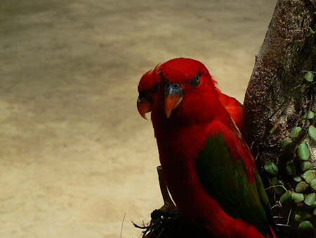 What to see in Bali: amazing parrots