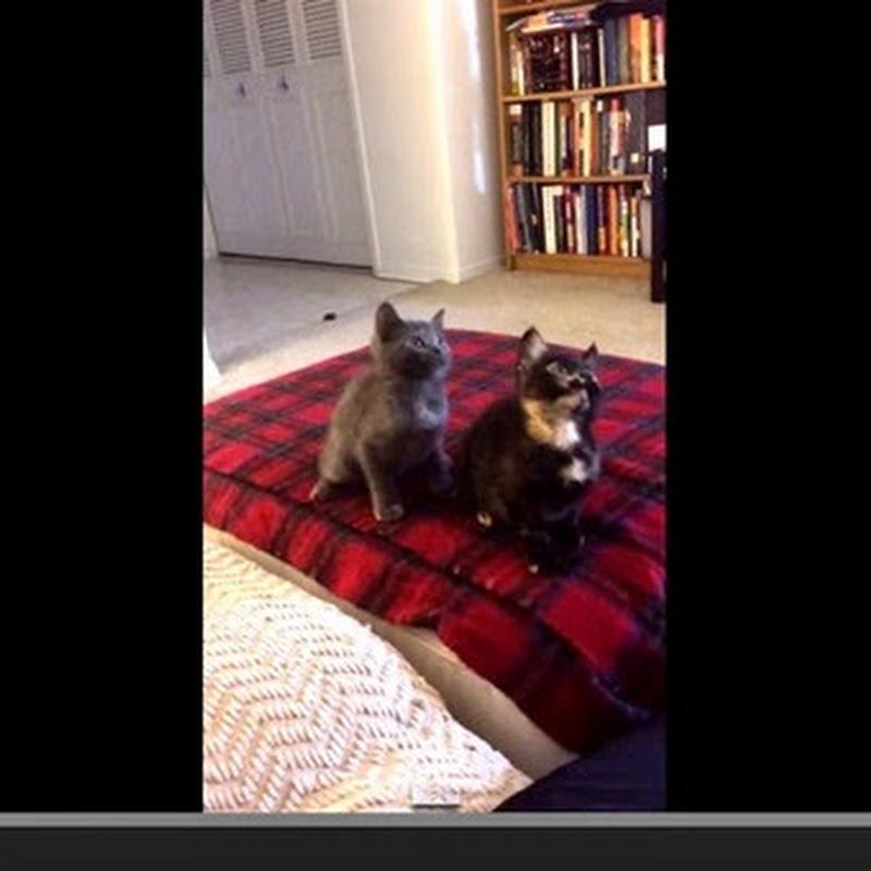Αξιολάτρευτα γατάκια χορεύουν