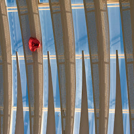 My Heart Will Go On by Pete Watson - Buildings & Architecture Other Interior ( ceiling, glass, architecture, balloon, bristol, Architecture, Ceilings, Ceiling, Buildings, Building )