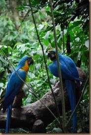 From Curitiba to Iguacu Falls (221)
