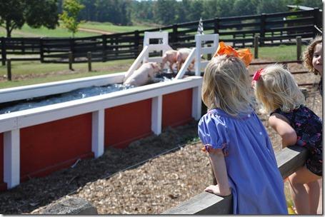 southern belle farm 100611 (53)