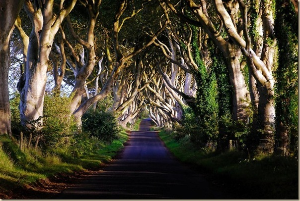The-dark-hedges-008