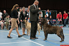 20130510-Bullmastiff-Worldcup-1179.jpg