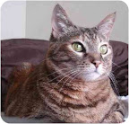 Chelsea is a domestic shorthair from Molly's Mutts & Meows in Los Angeles, one of the shelters Margo's Bark supports.