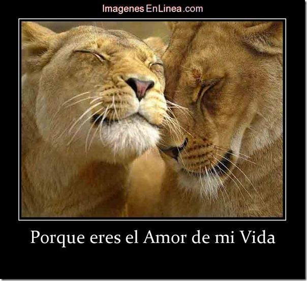 amor de mi vida  (1)