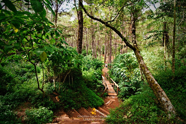 Camp John Hay Eco Trail in Baguio City