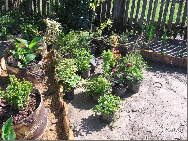 ogród 003