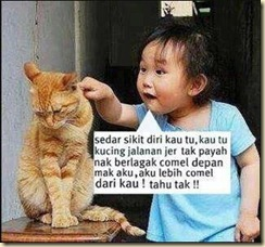 marah-kucing
