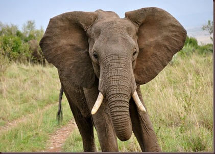 Amazing Animals Pictures Elephant (10)