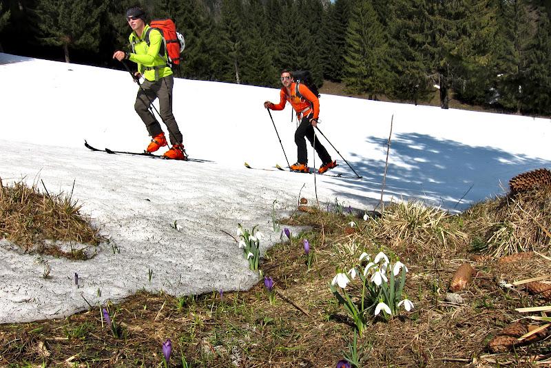 Primavara la munte intr-o imagine, schi, branduse si ghiocei.