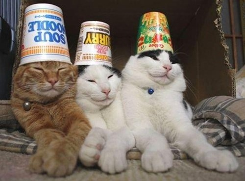 Party on... it's Saturday or Caturday