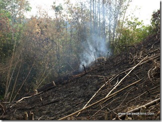 slash_burn_farming_23