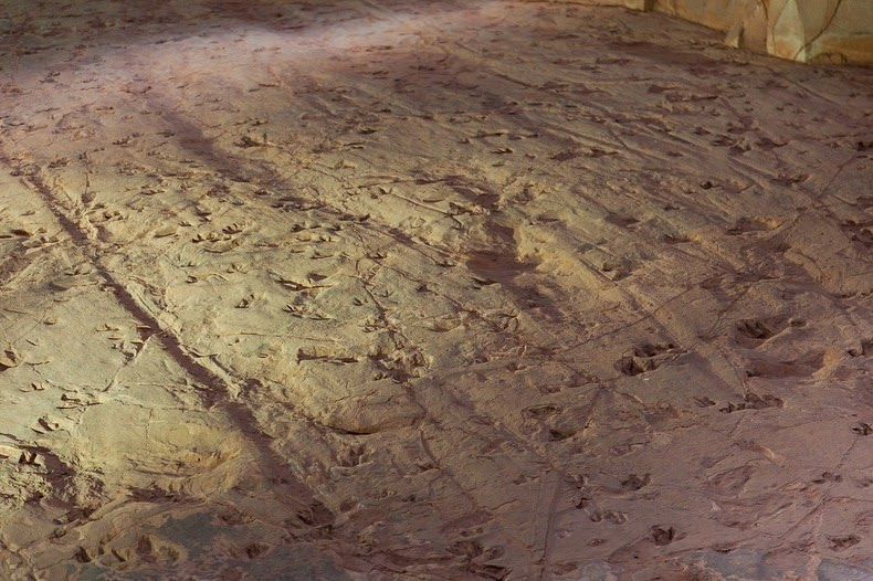 lark-quarry-dinosaur-trackways-3
