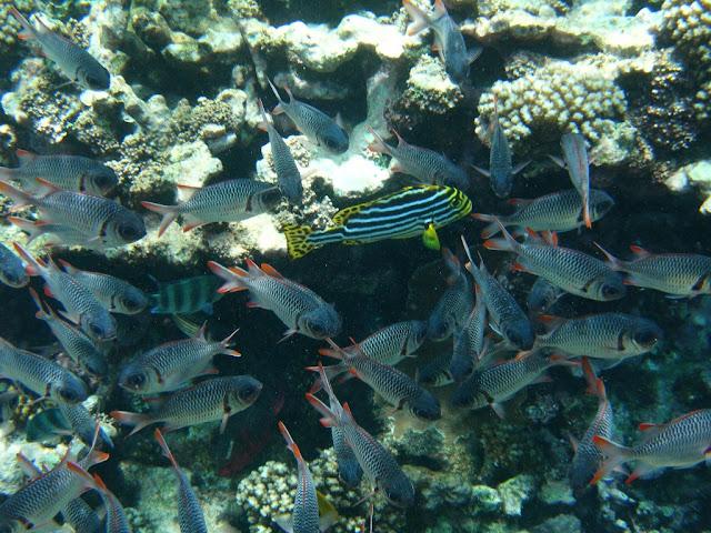 seychelles8_20070412_1653134729.jpg
