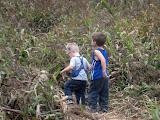 Little explorers in the corn maze.