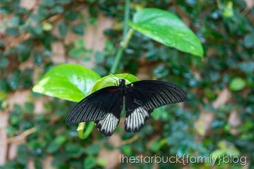 Callaway Gardens butterfly garden blog-12