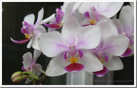03-07-orchids