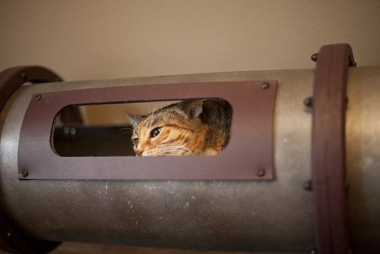 Trânsito de gatos 03
