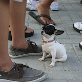 Pet Express Doggie Run 2012 Philippines. Jpg (252).JPG