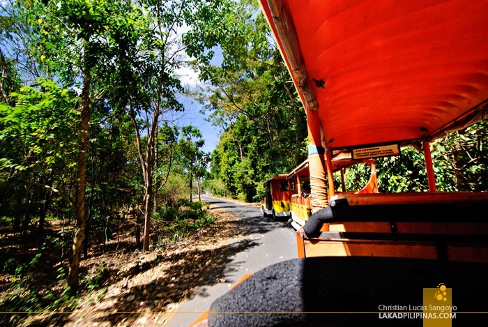 Tram Ride at Subic's Zoobic Safari