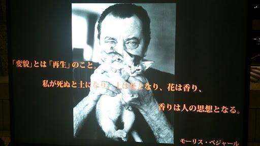 [写真]子猫とベジャール