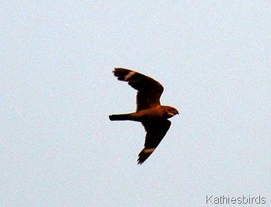 8. nighthawk-kab