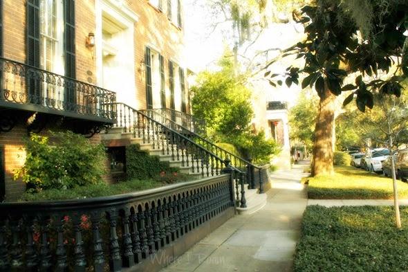 Savannah scenes 8