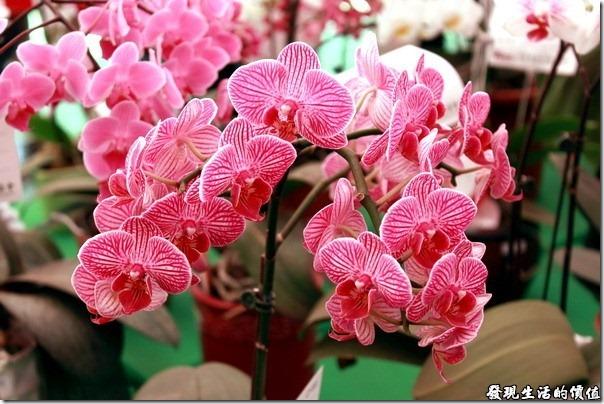 2012台南蘭花展16