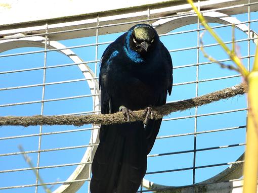 Экзотическая птица в Ботаническом саду в Бирмингеме