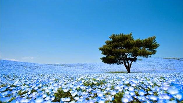 flores no japão
