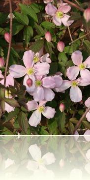 bloemen in de tuin 002