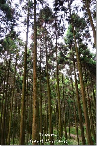 三峽熊空茶園 (28)