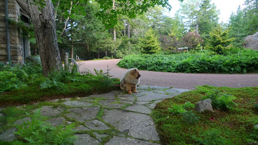 I'm usually a very obedient dog, and I wait patiently for Martha's lead.  However, today, I'm going to assert myself and take action.