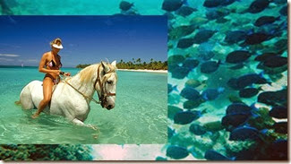 Launa Beach - horse